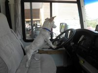 Rocky pulling up to gas pump.jpg